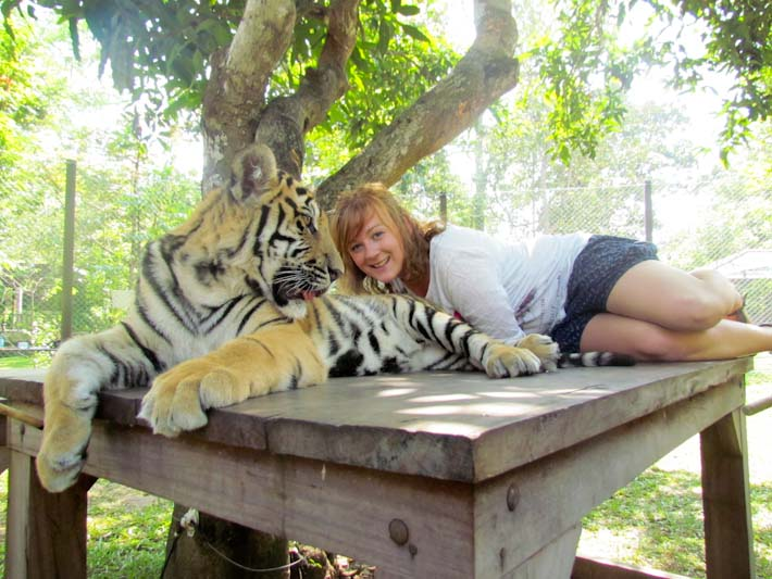 Kirsty with small tiger at tiger kingdom chiang mai