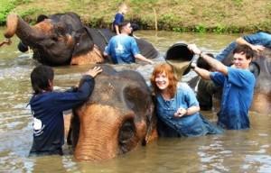 Baan Chang Elephant Chiang Mai