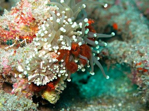 Diving in Padang Bai, Bali