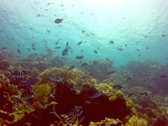 Diving on Matemwe Beach Zanzibar