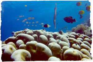 Thumbnail image for Diving with One Ocean, Matemwe Beach, Zanzibar