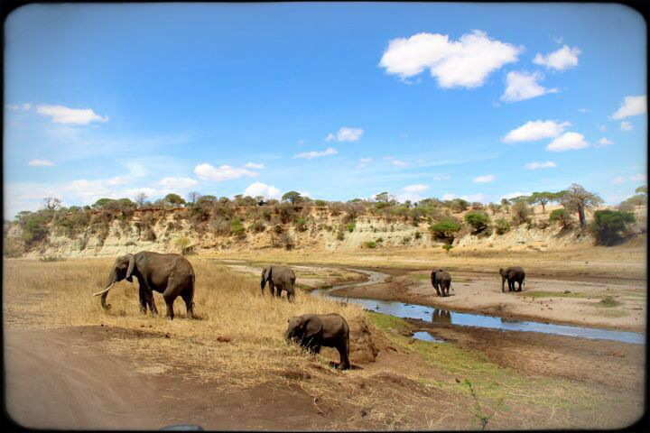 baby elephant Tarangire National Safari Park