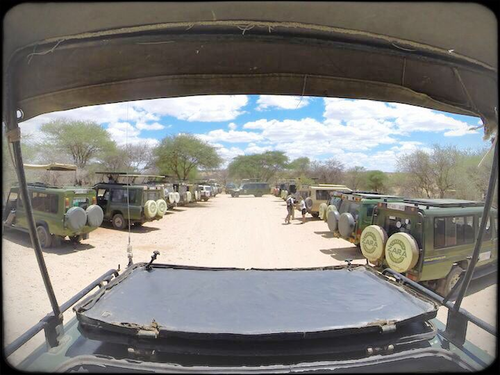 lots of 4x4 safari