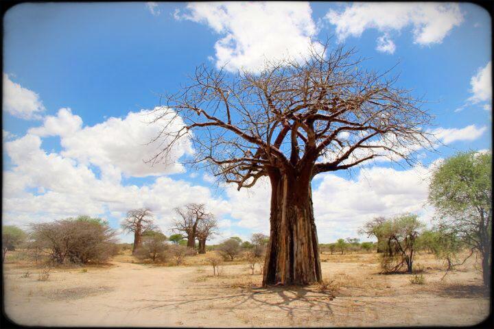 zTarangire National Safari Park