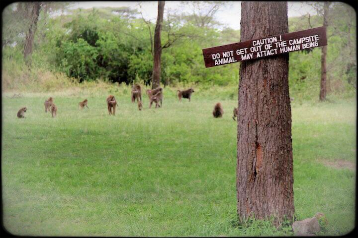 Interesting sign at the gate of the serengeti