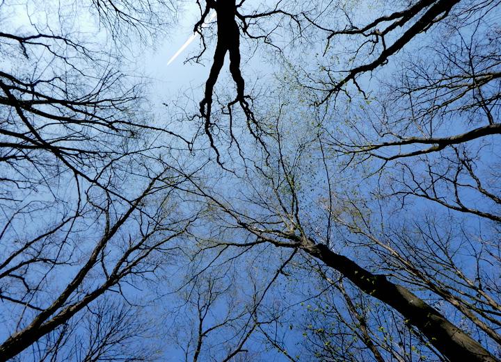 tunari forest